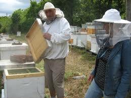 Prihrana pčela