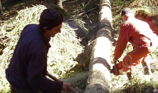 Sjemeć-sječa šume