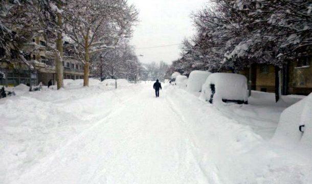 Foča pod snijegom