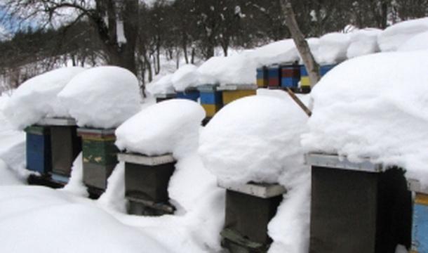 Košnice pod snijegom