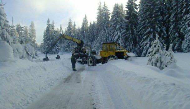Sječa šume po snijegu u Rogtici