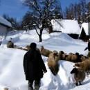 Višegradsko selo Kragujevac