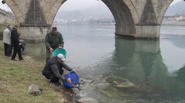 Poribljavanje Drine - Višegrad
