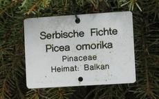 Pančićeva omorika