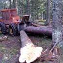 Sječa šume u Rogatici