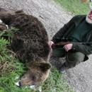 Medvjed u Rogatici