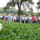 Dani polja krompira u Rogatici