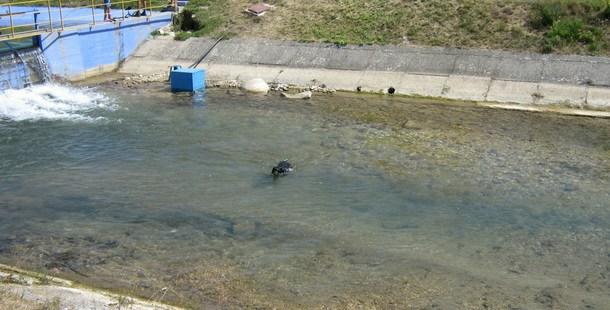 Pas koji voli vodu u Rogatici