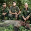 Ubijen medvjed u Foči