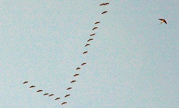Ždralovi-ptice