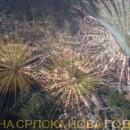 Foča-Srpska nova godina