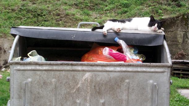 Mačka na kontejneru