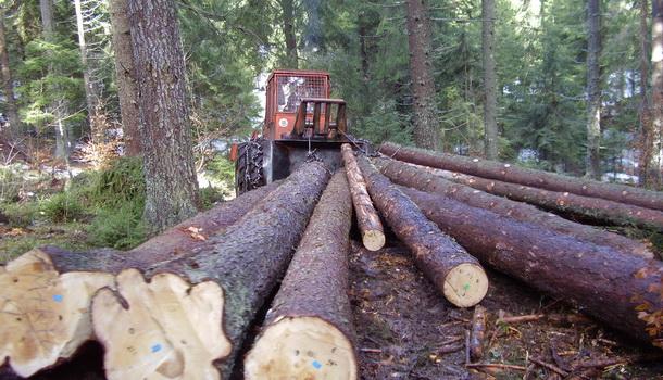 Izvlačenje šume