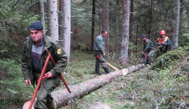ŠG Sjemeć-sječa šume
