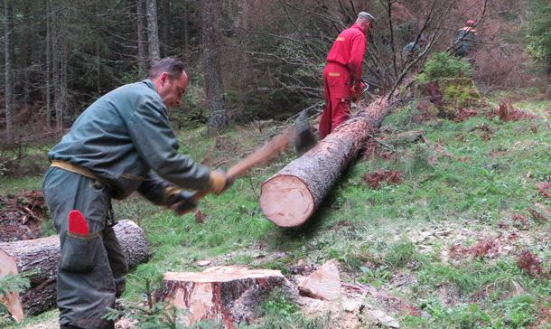 ŠG Sjemeć - sječa šume