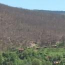 Šumu obrstila gusjenica