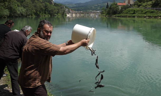Poribljavanje Drine u Višegradu