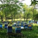 Košnice-med
