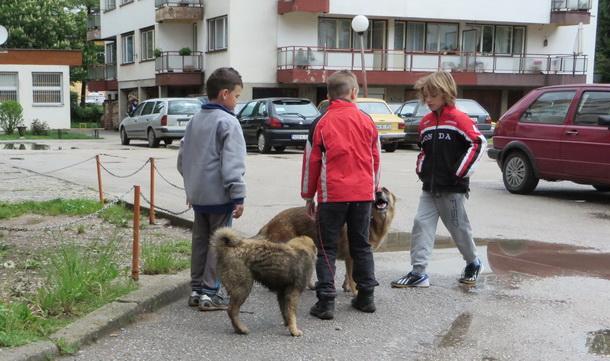 Psi lutalice u Rogatici