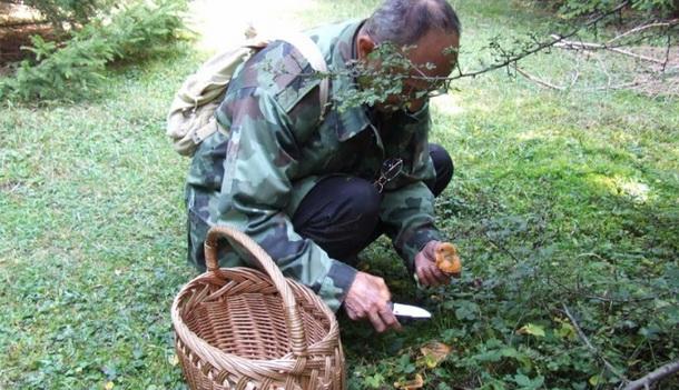 Berba gljiva