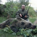 Medvjed u Foci