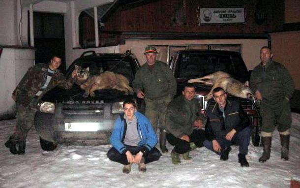 Lovci ubila dva vuka u Cajnicu