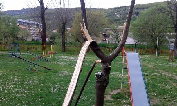 Park u Foci drvo