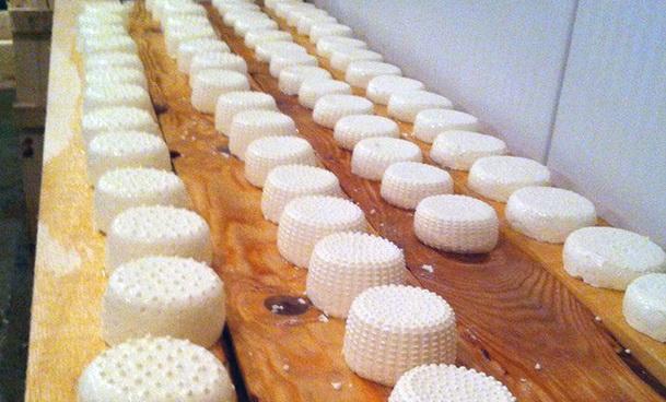 Proizvodnja sira u Foci