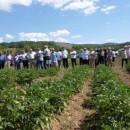 dani polja krompira 2015