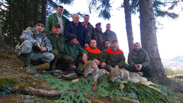 Lovci u Foci vuk
