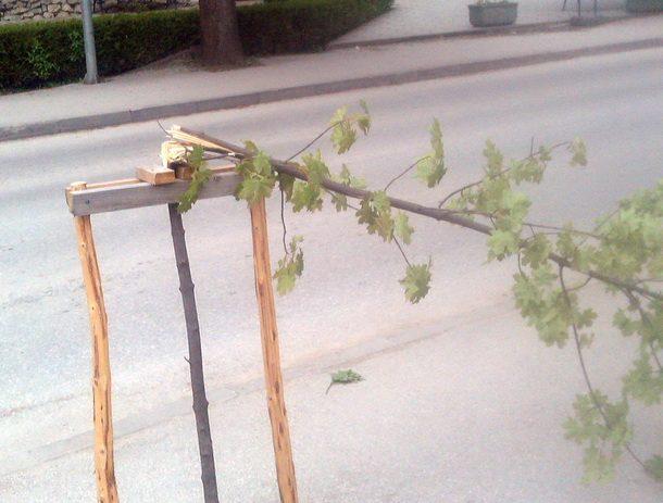 Vandalizam u Rogatici drvo