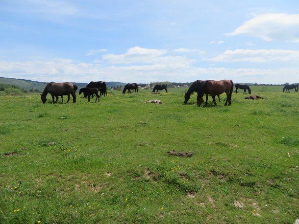 Rogatica-Sve manje konja na Borikama