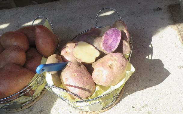 zarko-rackovicsa-krompirom-ljubicaste-boje-2