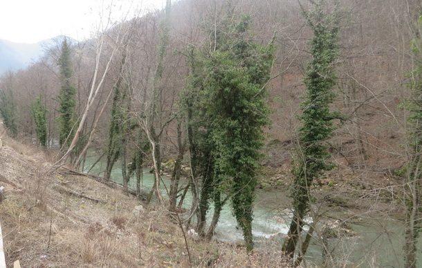 brsljen-na-drvetu-1
