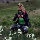 Zelengorski narcis