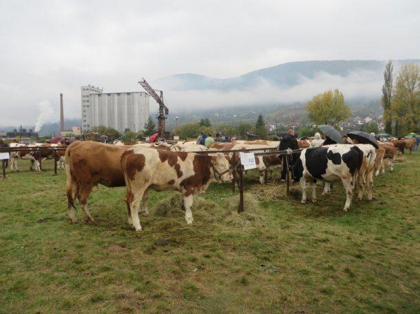 poljoprivredna-izlozba-u-rogatici-2017-8