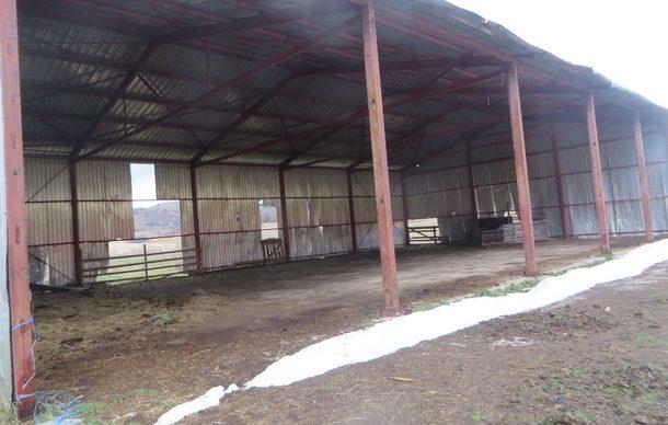 konji-ergela-na-borikama-2